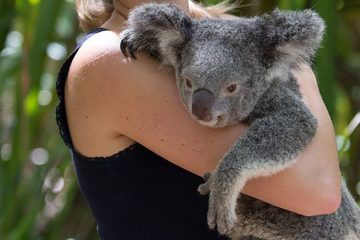 magnetic island koala cuddle bangalow bay package