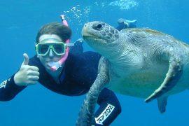 byron bay snorkel tour julian rocks day trip